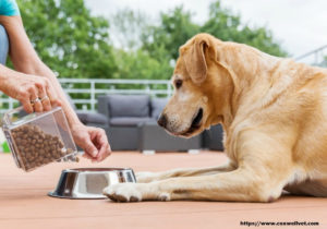 Pet Food For Your Pet's Health